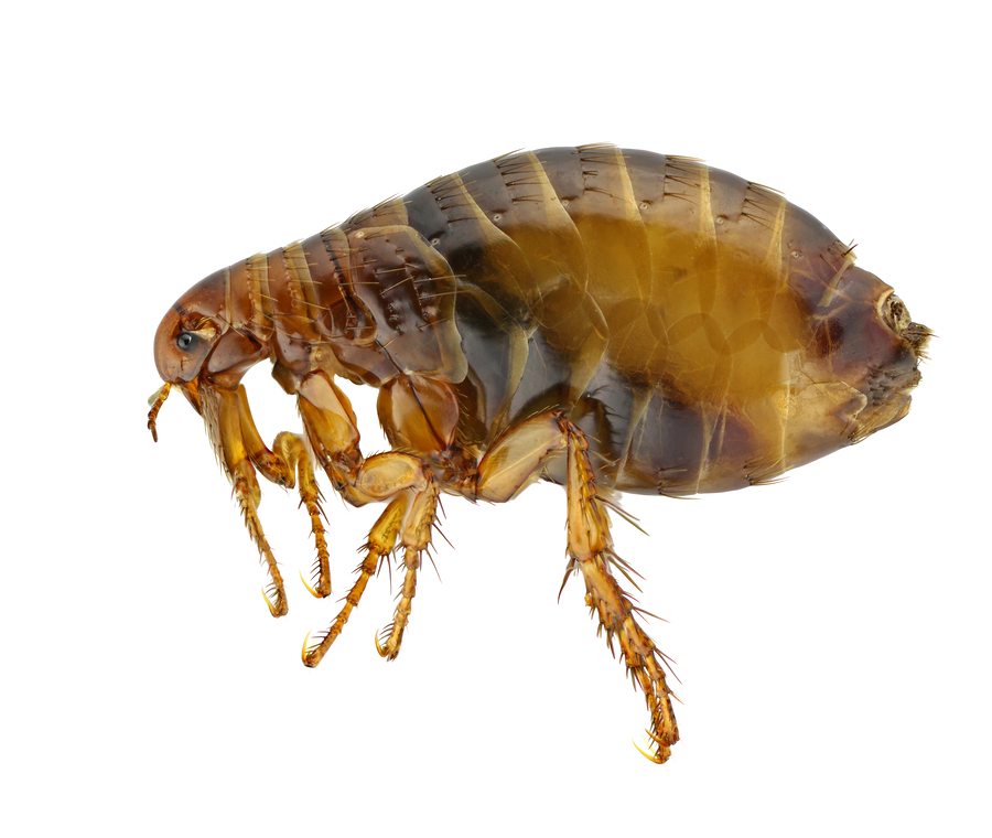 Flea Pest Control Products and Supplies