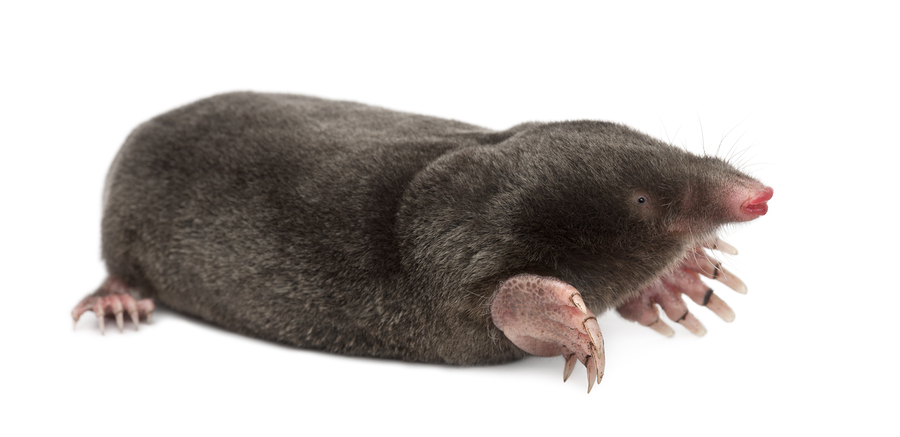 Gophers and Moles Pest Control Products and Supplies