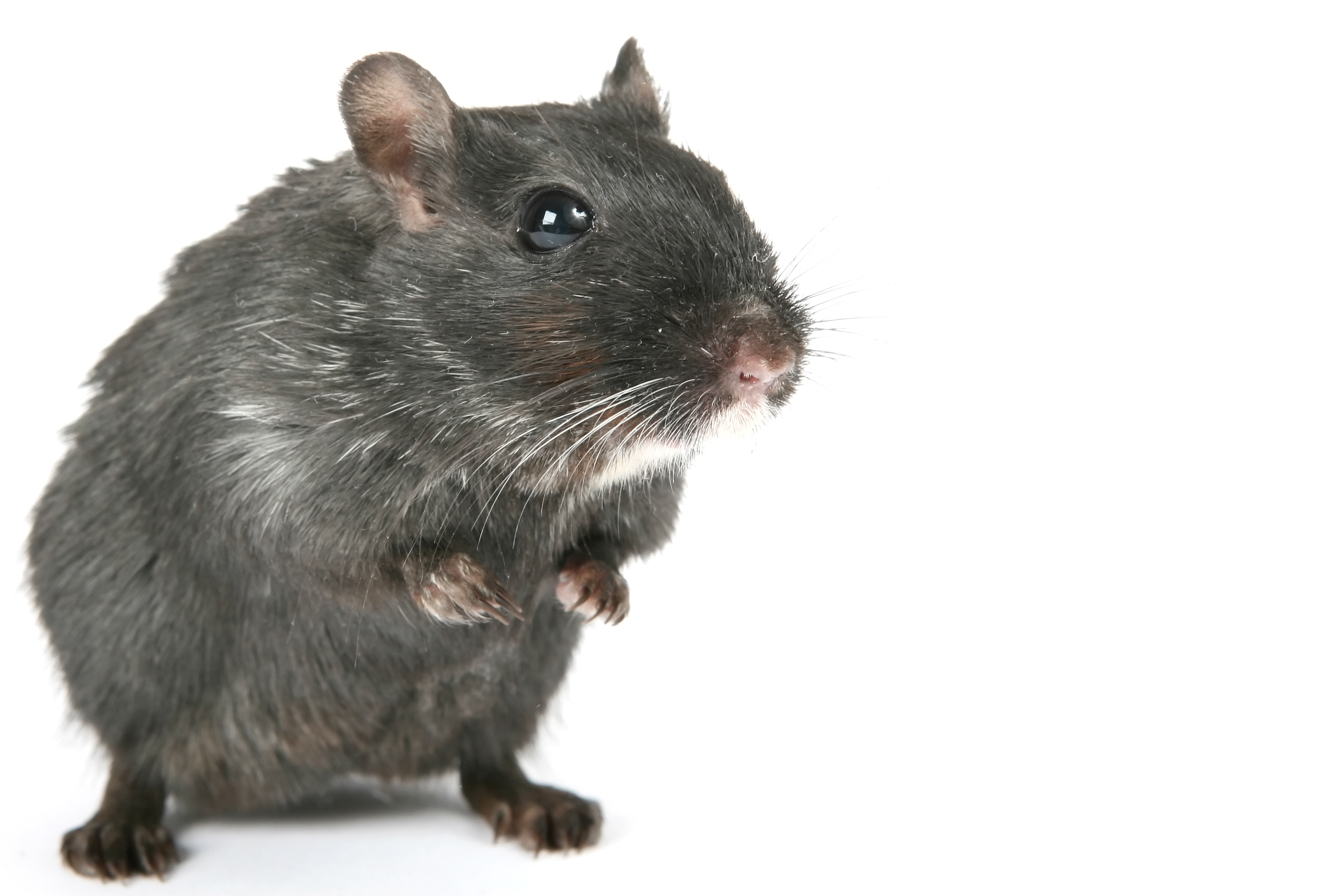 Rats and Mice Pest Control Products and Supplies